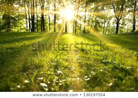 林間の空き地 · 光 · 草 · 太陽 · 緑 · 葉 - ストックフォト © tetkoren