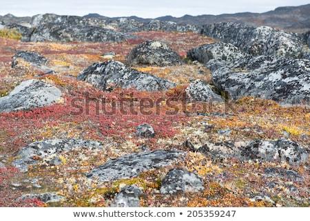 Vegetation Detail Natur Blatt Schönheit Berg Stock foto © Arrxxx