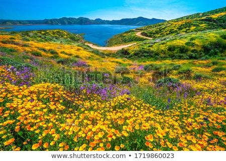 mező · gyönyörű · tavasz · vidék · út · arany - stock fotó © olandsfokus