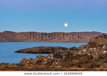 overgrown coast at night Stock photo © tracer