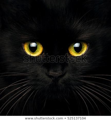 aranyos · torkolat · fekete · macska · közelkép · arc · éjszaka - stock fotó © vlad_star