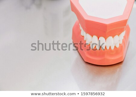teeth mold and prosthetic devices  close-up. Stock photo © fanfo
