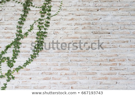 A stonewall with plants Stock photo © bluering