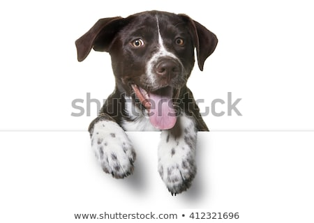 Stock photo: Mixed breed funny dog in a white studio