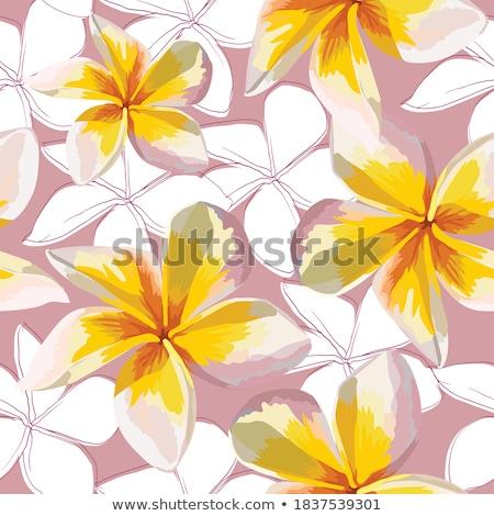 Fehér virág tele virágzik természet terv Stock fotó © pazham