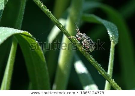 Küçük damla yaprak su yaz Stok fotoğraf © stefanoventuri