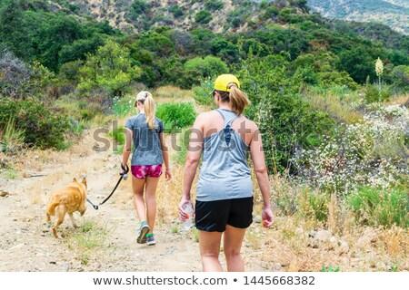 Család sétál kutya kosz út nyár Stock fotó © Kzenon