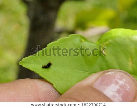 Caterpillar on New Plant Stock photo © 2tun
