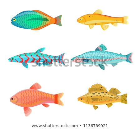 Jack Dempsey Marine Fish Set Vector Illustration Stock photo © robuart