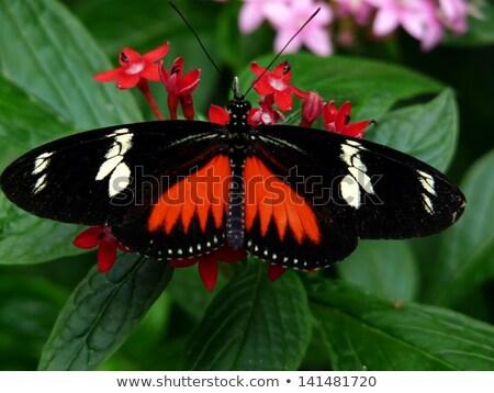 Farfalla nativo tropicali foresta pluviale Costarica fiore Foto d'archivio © Lopolo