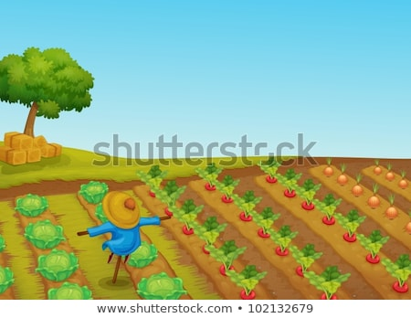 Farm scene with scarecrow and vegetables garden Stock photo © colematt