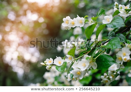 Fleurs vert Bush illustration fleur nature Photo stock © colematt
