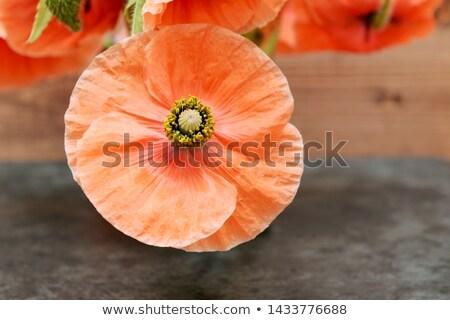 Poppy flower with pollen-laden stamen Stock photo © sarahdoow