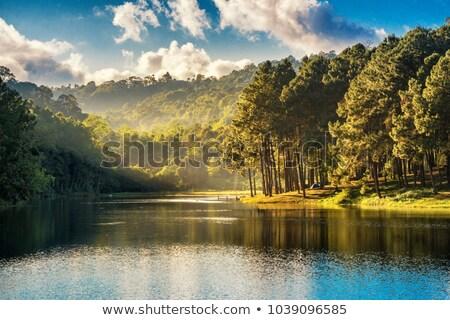 Foto stock: A Nature Stream Landscape