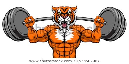 Tigris kabala súlyemelés súlyzó test építész Stock fotó © Krisdog