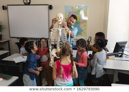 Male teacher explaining skeleton model in classroom of elementary school Stock photo © wavebreak_media