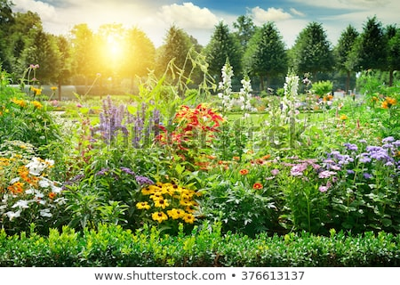 Bright Multicolored Flowerbed Stockfoto © Serg64