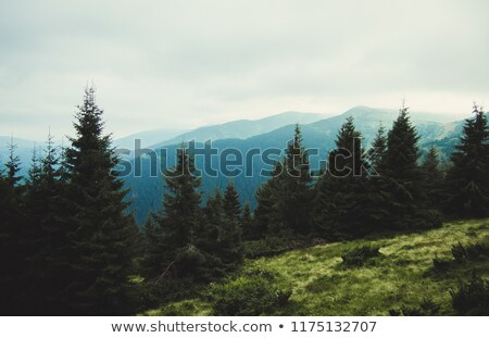 Natuur landschap hdr afbeelding verscheidene shot Stockfoto © vlad_star