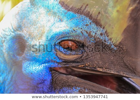 Cassowary eye Stock photo © stevanovicigor