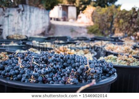 Valle Portugal frutas fondo Europa aire libre Foto stock © phbcz