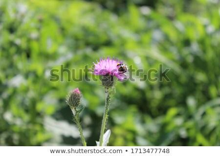 erva · daninha · jardim · verão - foto stock © juniart