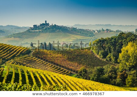 Autumnal vineyards on the hills in Piedmont, Italy. Stock photo © rglinsky77