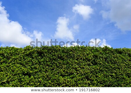 repeating pattern tile of grass with flowers and sky stock photo © heliburcka