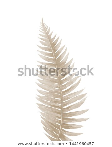 detail of a dead fern leaf in autumn stock photo © alessandrozocc