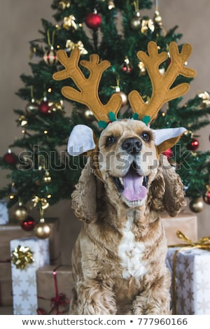 boldog · kutya · karácsony · buli · visel · vicces - stock fotó © marinini