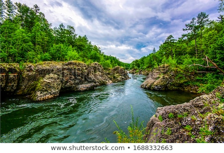 forest mountain river stock photo © romvo