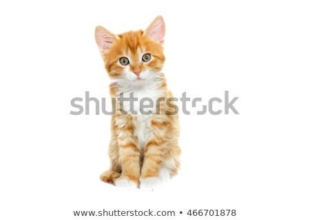 Сток-фото: имбирь · котенка · белый · ребенка · кошки
