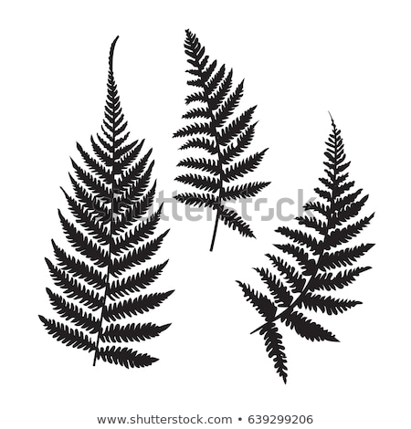 Fern silhouette Stock photo © gladiolus