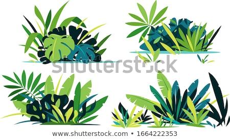 Vegetatie ingesteld vector champignons bloem Stockfoto © Tawng