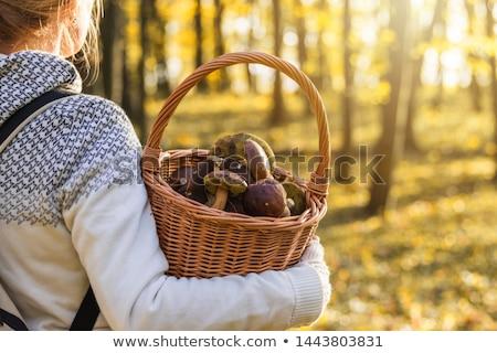 キノコ · 森林 · 浅い · フィールド · バスケット · ツリー - ストックフォト © pedrosala