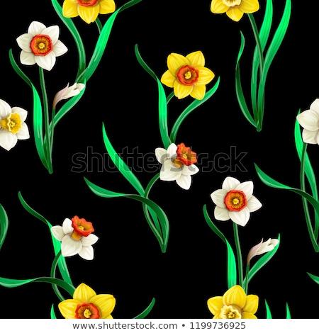 Wild White Daffodils Stock photo © zhekos