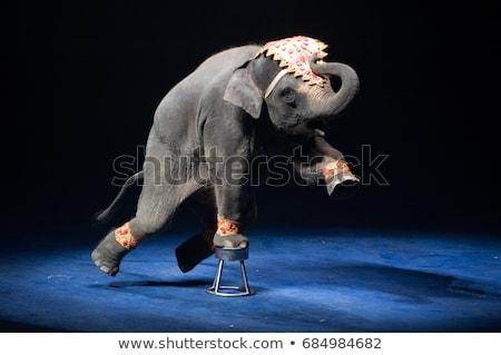 elephant circus Stock photo © adrenalina