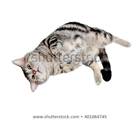 Baby cat lying on back Stock photo © simply