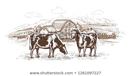 özenli · inekler · siyah · beyaz · alan · bahar · yüz - stok fotoğraf © goce