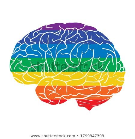 人体解剖学 異なる ポスター 実例 中心 ストックフォト © bluering