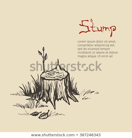 wooden pencils on tree stump stock photo © sandralise