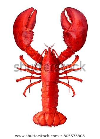 a red lobster on white background stock photo © bluering