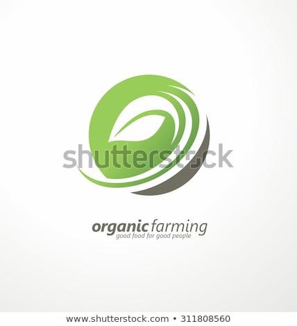 Soyut logo yeşil insanlar taze biyo Stok fotoğraf © blaskorizov
