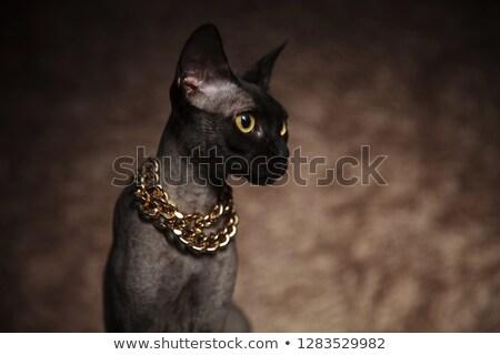 közelkép · buzgó · macska · felfelé · néz · oldal · visel - stock fotó © feedough