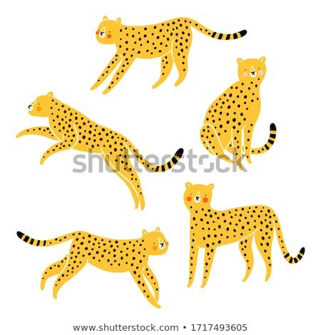 Conjunto leopardo ilustração feliz gato Foto stock © colematt