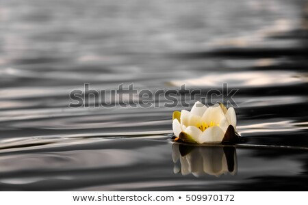 River scene with water lilies floating Stock photo © colematt
