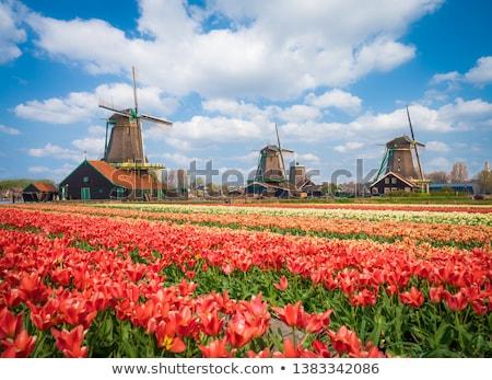 río · pueblo · Holanda · edad · paisaje - foto stock © anna_om