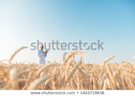 Foto stock: Man Doing Research On Genetically Modified Grain In Wheat Field