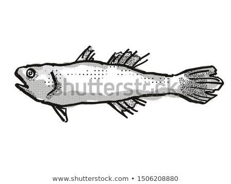 オーストラリア人 魚 漫画 レトロな 図面 スタイル ストックフォト © patrimonio