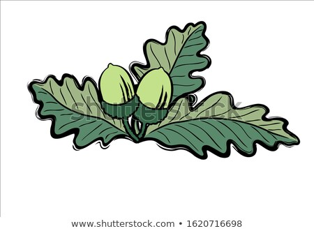 Acorns with Oak Leafs drawn in loose freestyle in retro colours Stock photo © fenton