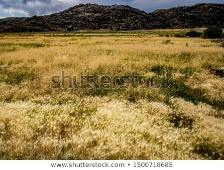 Peaceful River with Beautiful Yellow Tree and Desert Mountains Stock photo © pixelsnap